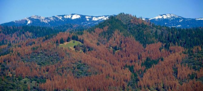 Dying trees in California.  100 million dead not 66 million.